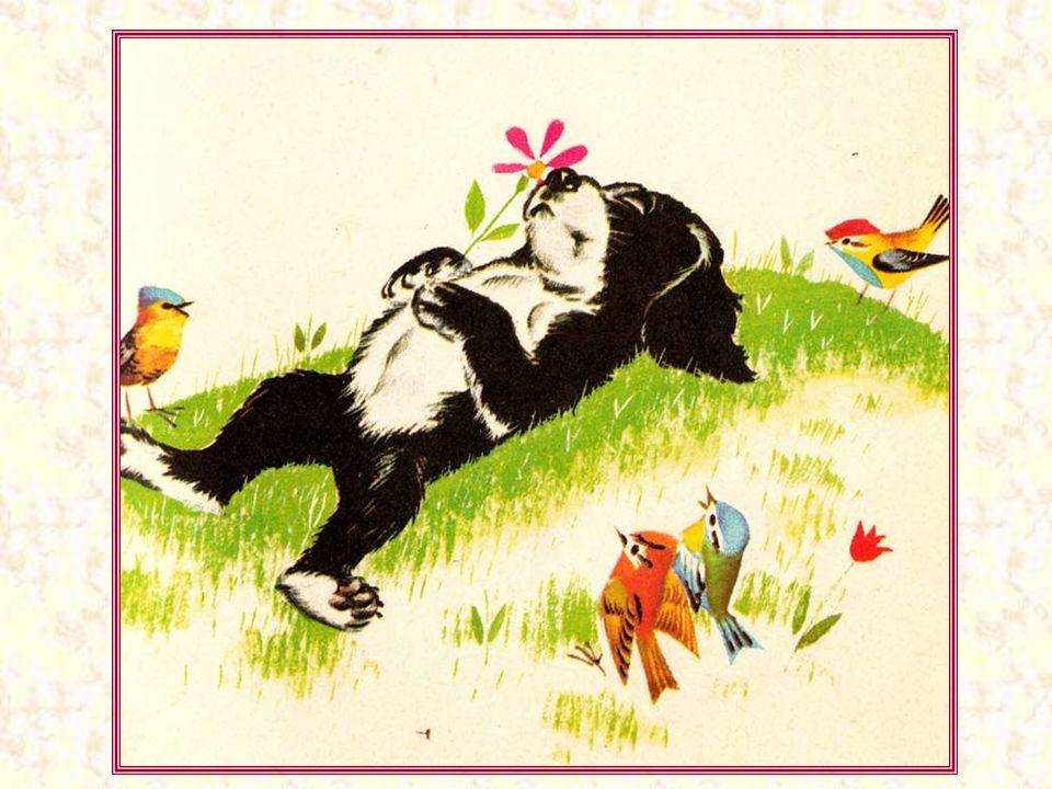 Mais ça fatigue de pédaler ! Une petite sieste au soleil revenu… L'herbe est encore un peu humide, mais Noiraud a une bonne fourrure, et il ne craint