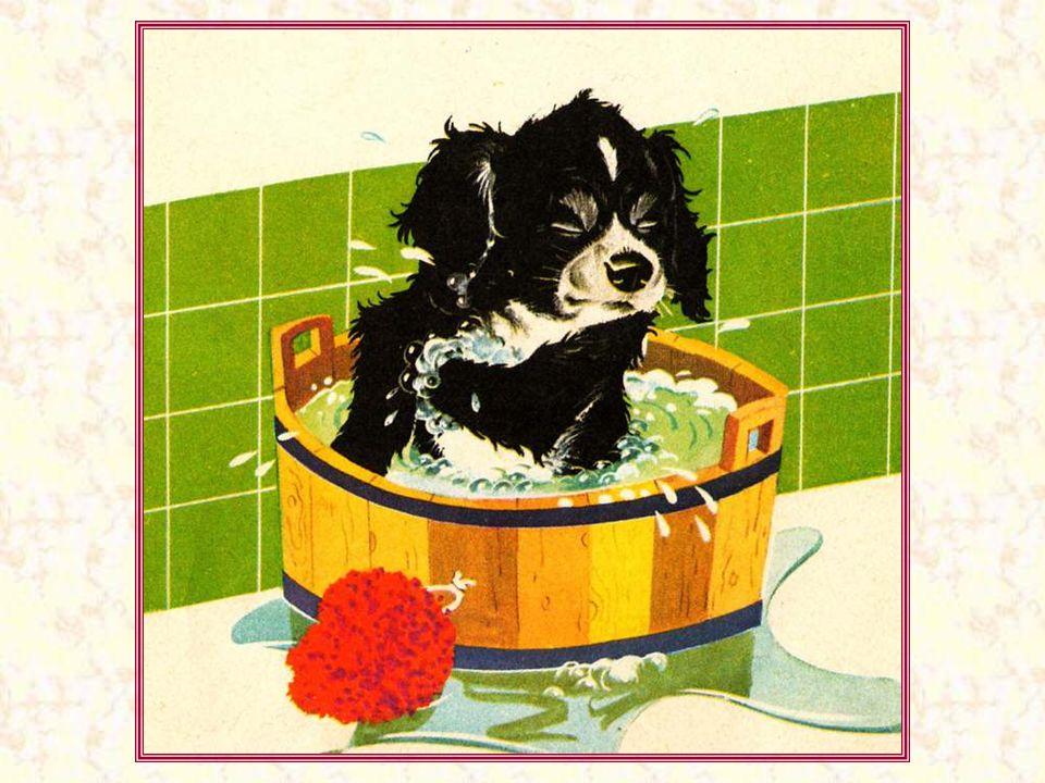 Un bon bain, rien de tel pour bien se réveiller.
