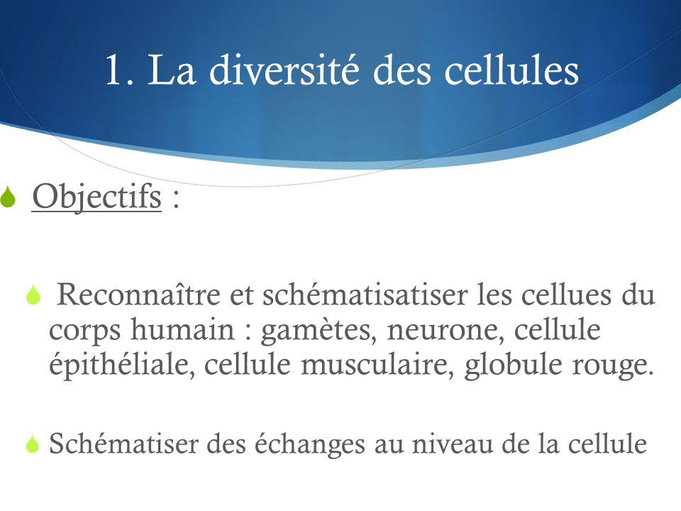 1. La diversité des cellules  Objectifs :  Reconnaître et schématisatiser les cellues du corps humain : gamètes, neurone, cellule épithéliale, cellu
