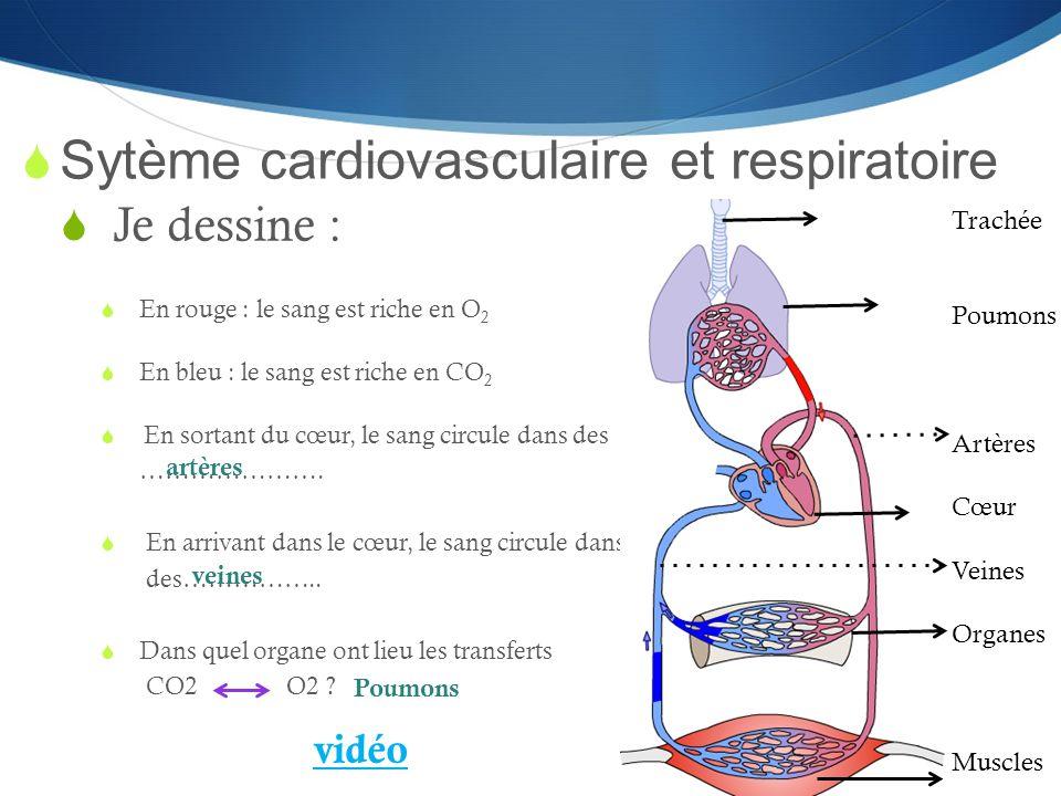  Sytème cardiovasculaire et respiratoire  Je dessine :  En rouge : le sang est riche en O 2  En bleu : le sang est riche en CO 2  En sortant du c