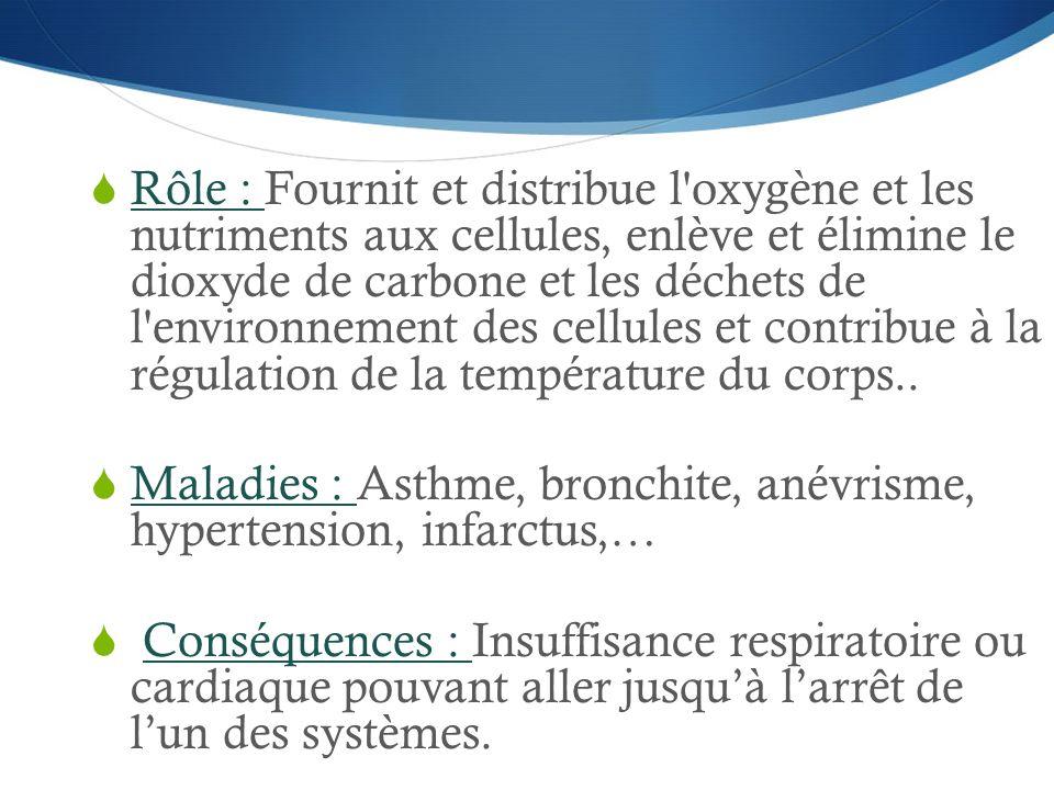  Rôle : Fournit et distribue l'oxygène et les nutriments aux cellules, enlève et élimine le dioxyde de carbone et les déchets de l'environnement des