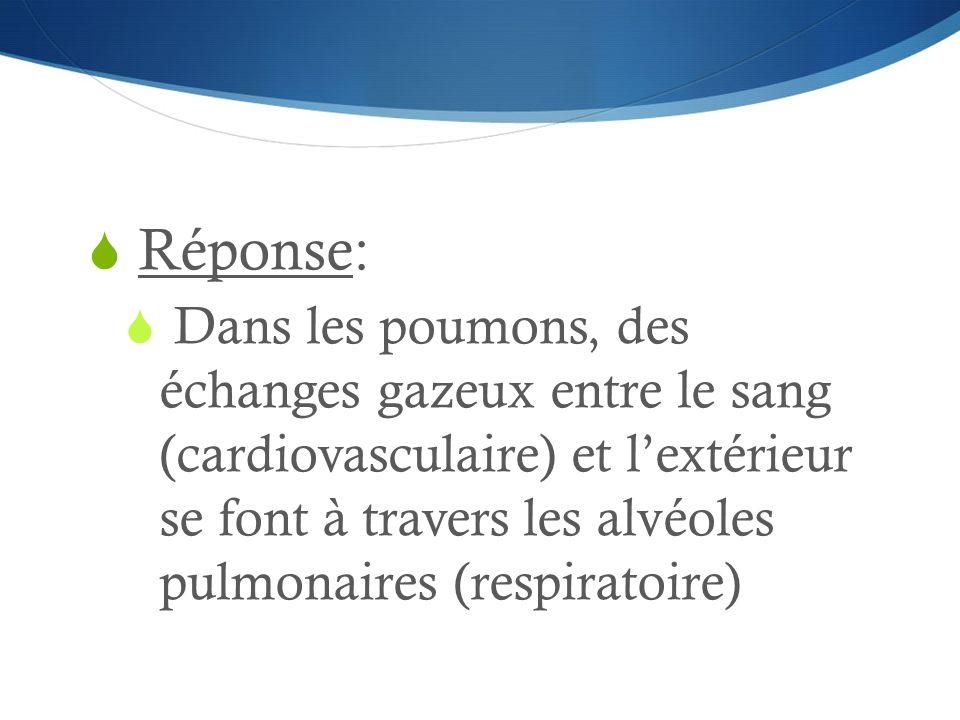  Réponse:  Dans les poumons, des échanges gazeux entre le sang (cardiovasculaire) et l'extérieur se font à travers les alvéoles pulmonaires (respira