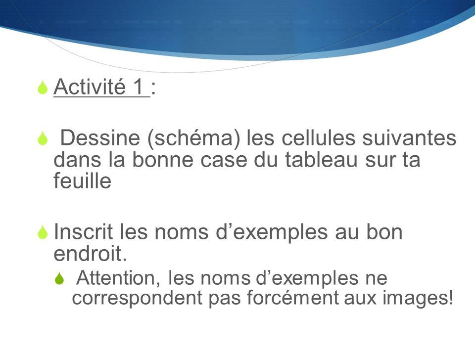  Activité 1 :  Dessine (schéma) les cellules suivantes dans la bonne case du tableau sur ta feuille  Inscrit les noms d'exemples au bon endroit. 