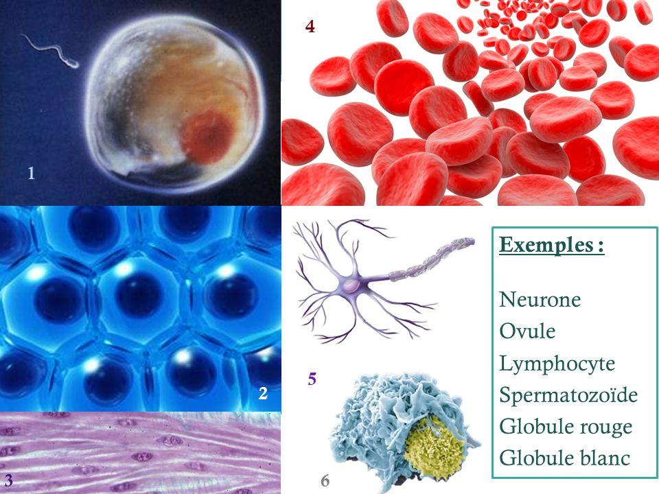  Activité 2 :  Par deux, faites l'exercice sur la diversité des cellules  Astuce : procède par élimination si tu ne parviens pas à trouver la réponse