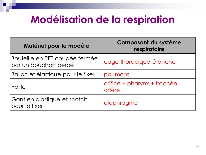 16 Modélisation de la respiration Matériel pour le modèle Composant du système respiratoire Bouteille en PET coupée fermée par un bouchon percé cage t