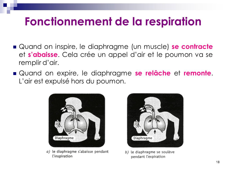 18 Fonctionnement de la respiration Quand on inspire, le diaphragme (un muscle) se contracte et s'abaisse. Cela crée un appel d'air et le poumon va se