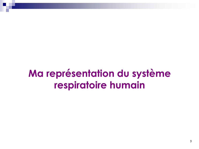 3 Ma représentation du système respiratoire humain