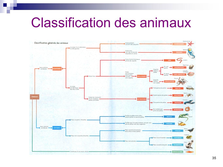 35 Classification des animaux