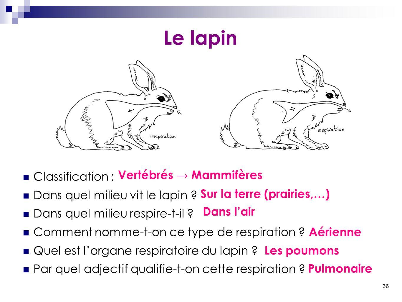 36 Le lapin Classification : Dans quel milieu vit le lapin ? Dans quel milieu respire-t-il ? Comment nomme-t-on ce type de respiration ? Quel est l'or