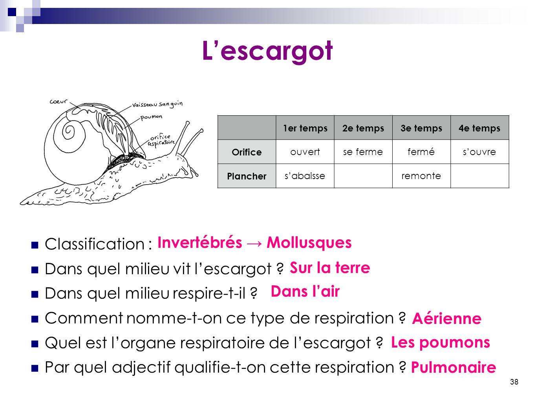 38 L'escargot Classification : Dans quel milieu vit l'escargot ? Dans quel milieu respire-t-il ? Comment nomme-t-on ce type de respiration ? Quel est