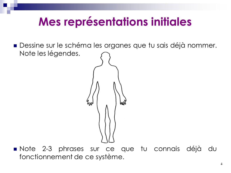4 Mes représentations initiales Dessine sur le schéma les organes que tu sais déjà nommer. Note les légendes. Note 2-3 phrases sur ce que tu connais d