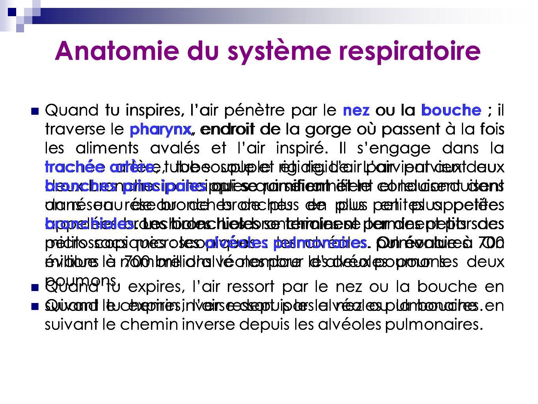 Anatomie du système respiratoire Quand tu inspires, l'air pénètre par le nez ou la bouche ; il traverse le pharynx, endroit de la gorge où passent à l