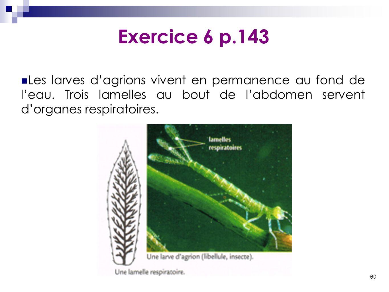 60 Les larves d'agrions vivent en permanence au fond de l'eau. Trois lamelles au bout de l'abdomen servent d'organes respiratoires. Exercice 6 p.143