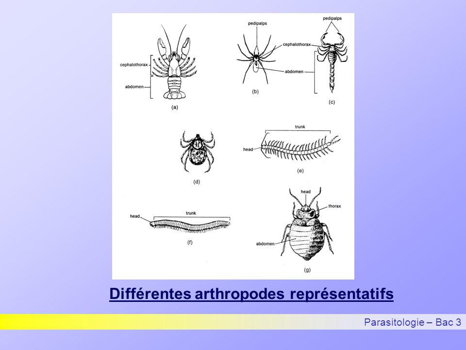 Différentes arthropodes représentatifs Parasitologie – Bac 3