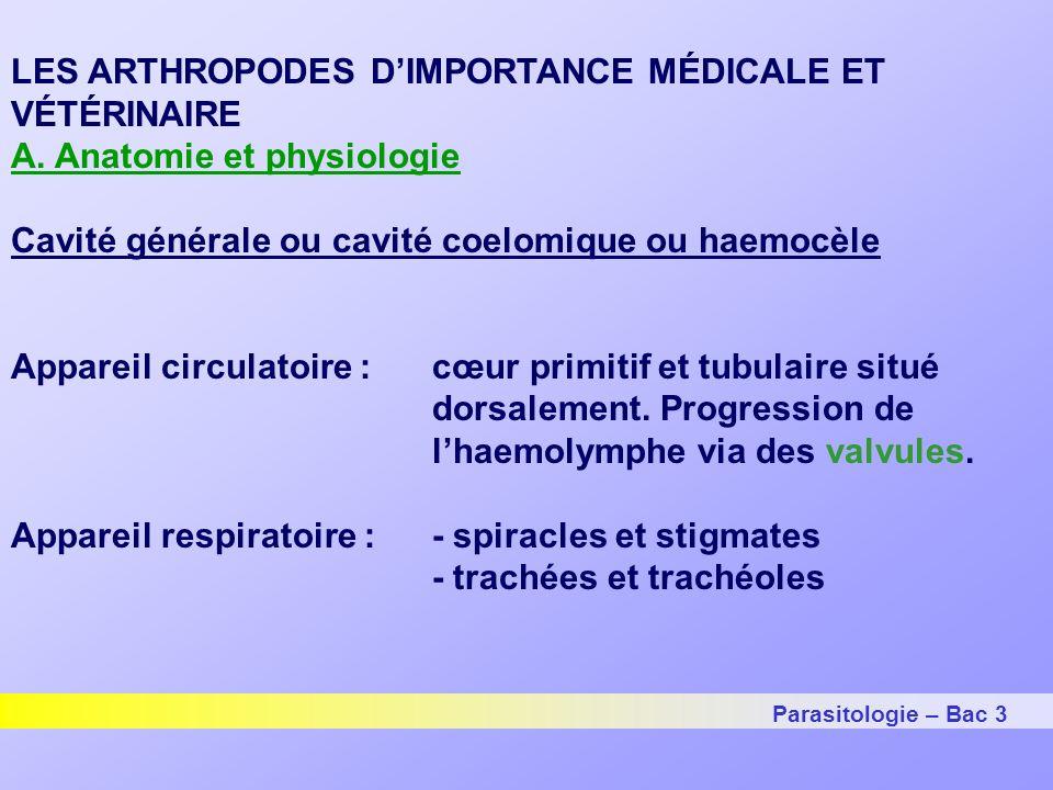 Parasitologie – Bac 3 LES ARTHROPODES D'IMPORTANCE MÉDICALE ET VÉTÉRINAIRE A.
