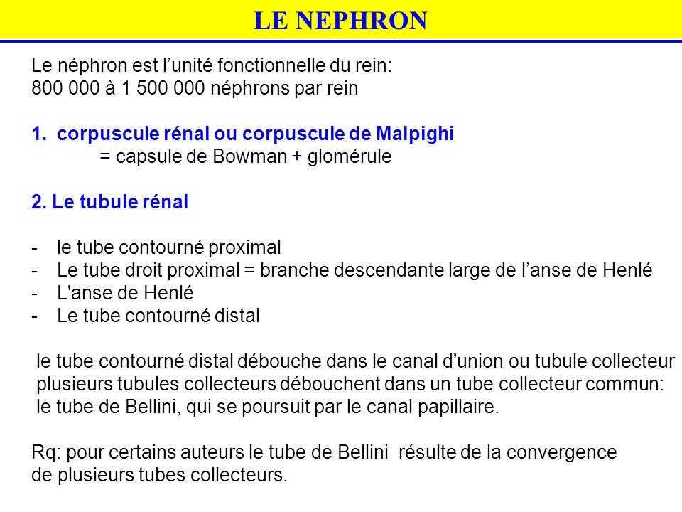LE NEPHRON Le néphron est l'unité fonctionnelle du rein: 800 000 à 1 500 000 néphrons par rein 1.corpuscule rénal ou corpuscule de Malpighi = capsule
