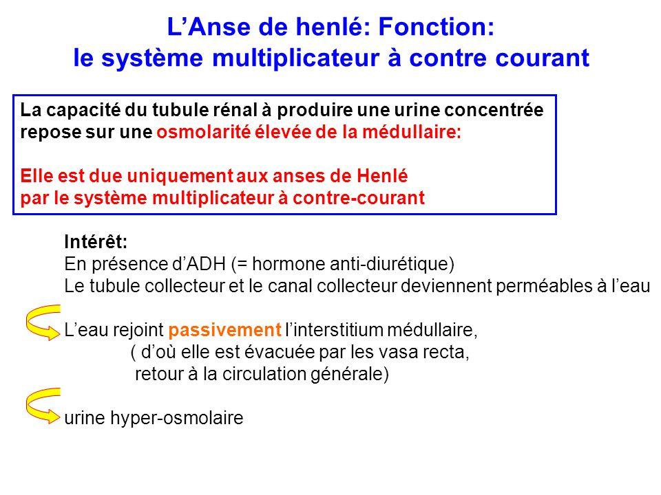 L'Anse de henlé: Fonction: le système multiplicateur à contre courant La capacité du tubule rénal à produire une urine concentrée repose sur une osmol