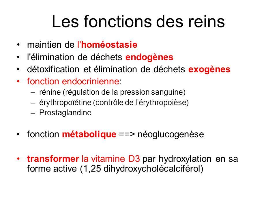 Les fonctions des reins maintien de l'homéostasie l'élimination de déchets endogènes détoxification et élimination de déchets exogènes fonction endocr
