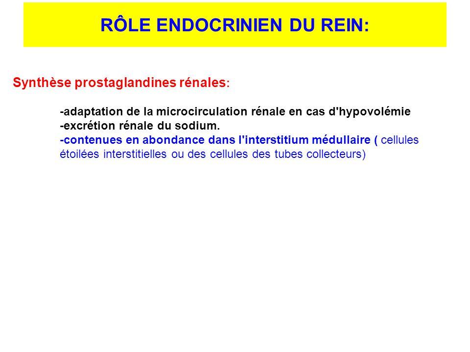 Synthèse prostaglandines rénales : -adaptation de la microcirculation rénale en cas d'hypovolémie -excrétion rénale du sodium. -contenues en abondance