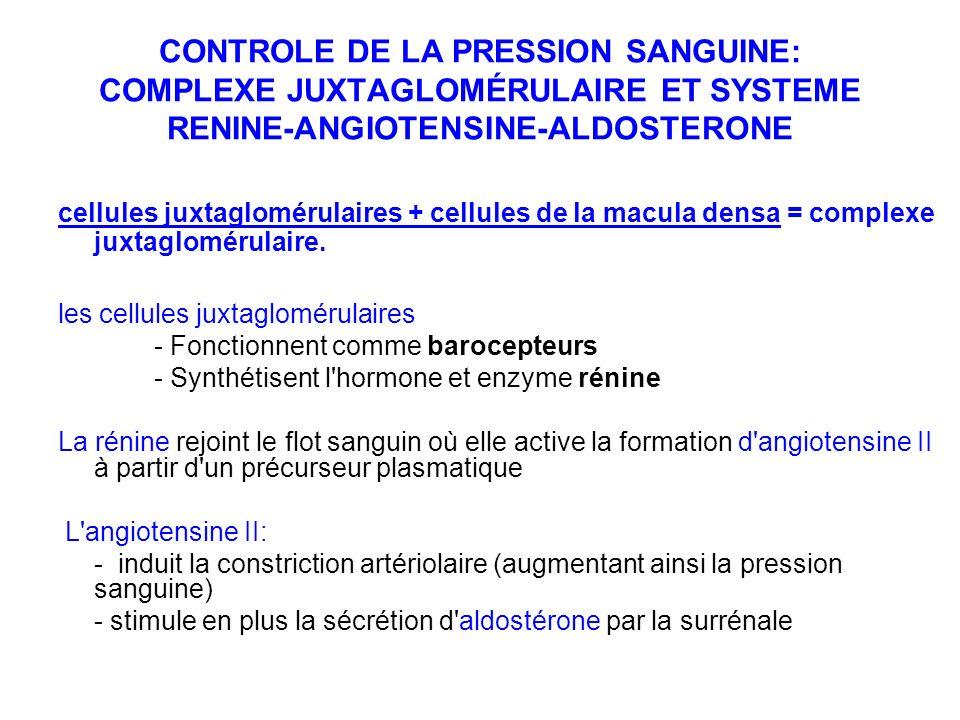 CONTROLE DE LA PRESSION SANGUINE: COMPLEXE JUXTAGLOMÉRULAIRE ET SYSTEME RENINE-ANGIOTENSINE-ALDOSTERONE cellules juxtaglomérulaires + cellules de la m