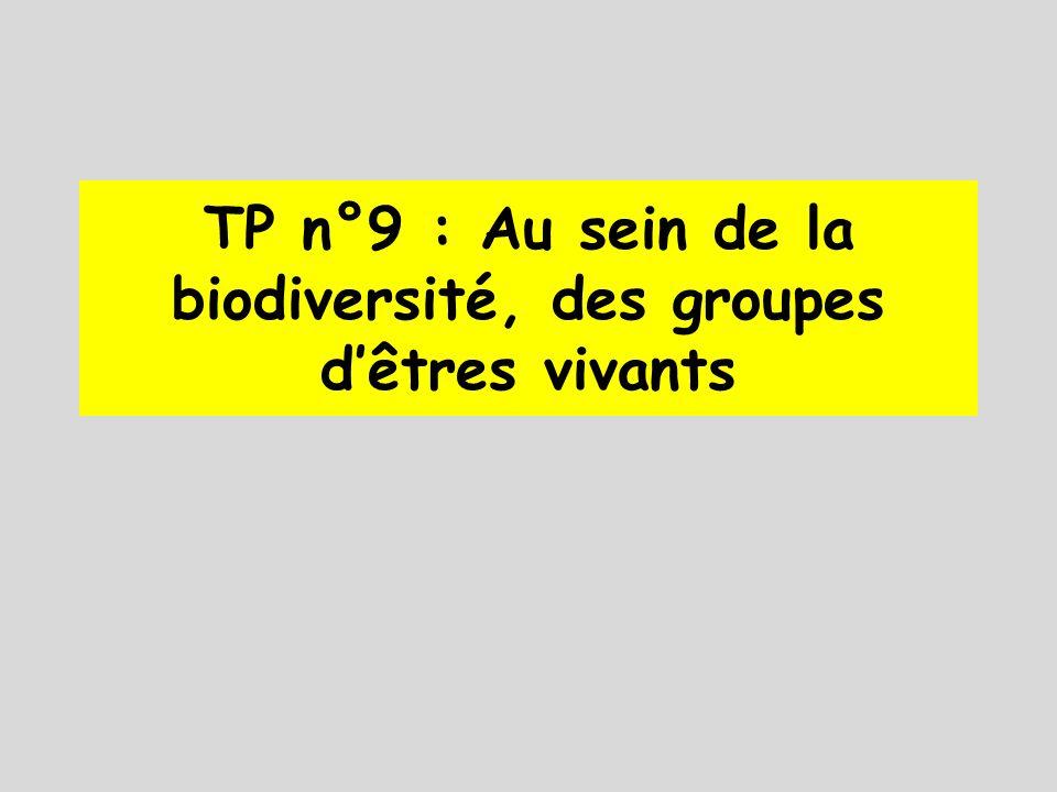TP n°9 : Au sein de la biodiversité, des groupes d'êtres vivants