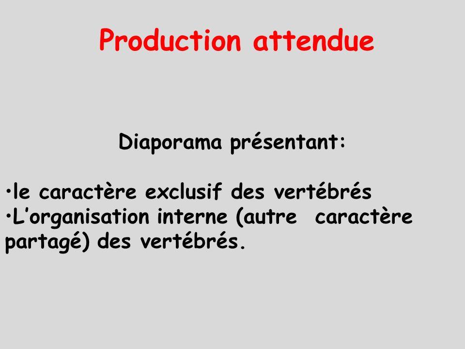 Production attendue Diaporama présentant: le caractère exclusif des vertébrés L'organisation interne (autre caractère partagé) des vertébrés.