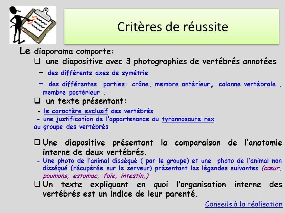 Critères de réussite Le diaporama comporte:  une diapositive avec 3 photographies de vertébrés annotées - des différents axes de symétrie - des diffé