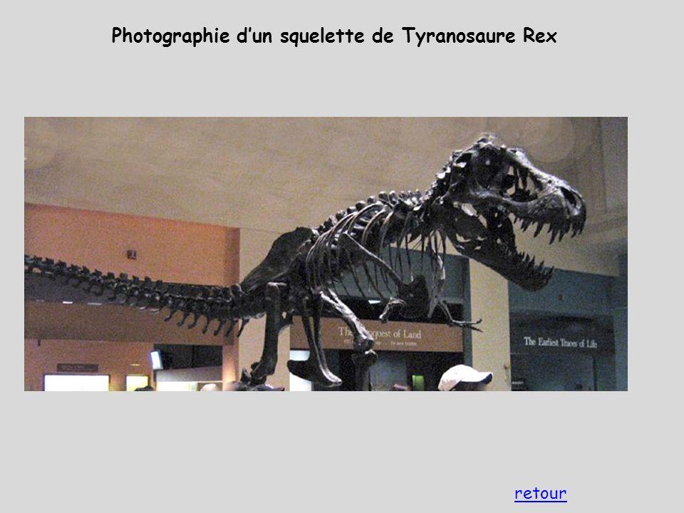 Photographie d'un squelette de Tyranosaure Rex retour