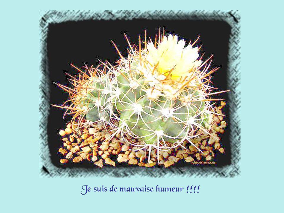 Certains jours, comme les cactus de maman, je sors mes piquants !