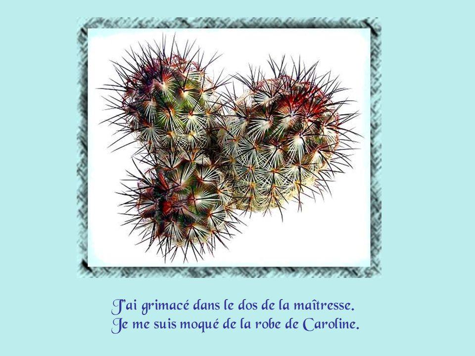 Ma douceur à nouveau se montrera, Comme celle du cactus de maman que je peux caresser !