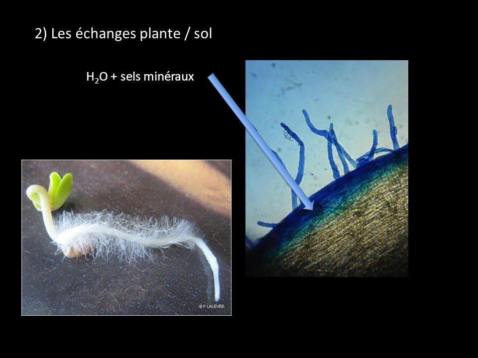 2) Les échanges plante / sol H 2 O + sels minéraux