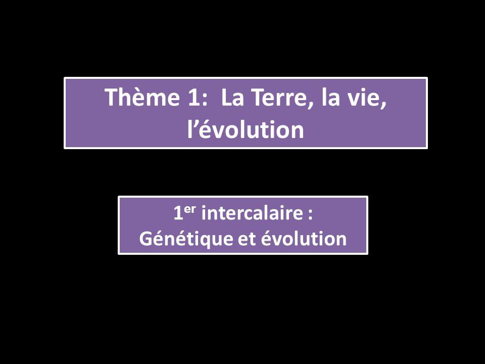 Thème 1: La Terre, la vie, l'évolution 1 er intercalaire : Génétique et évolution 1 er intercalaire : Génétique et évolution