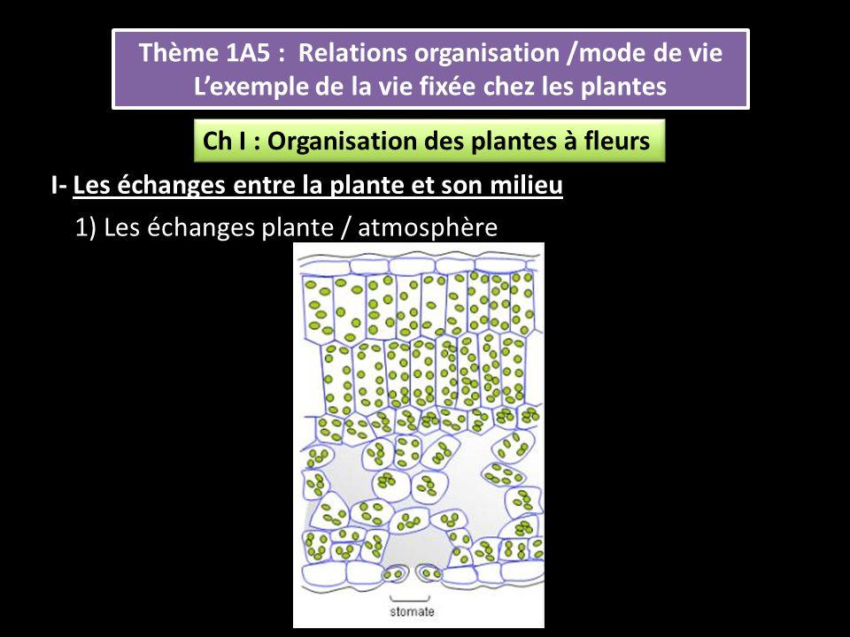 Thème 1A5 : Relations organisation /mode de vie L'exemple de la vie fixée chez les plantes Thème 1A5 : Relations organisation /mode de vie L'exemple de la vie fixée chez les plantes I- Les échanges entre la plante et son milieu 1) Les échanges plante / atmosphère Ch I : Organisation des plantes à fleurs