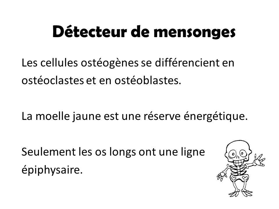 Les cellules ostéogènes se différencient en ostéoclastes et en ostéoblastes. La moelle jaune est une réserve énergétique. Seulement les os longs ont u