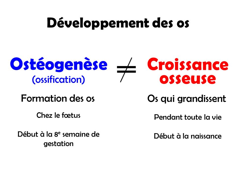 Développement des os Ostéogenèse (ossification) Croissance osseuse Formation des os Os qui grandissent Chez le fœtus Début à la 8 e semaine de gestati