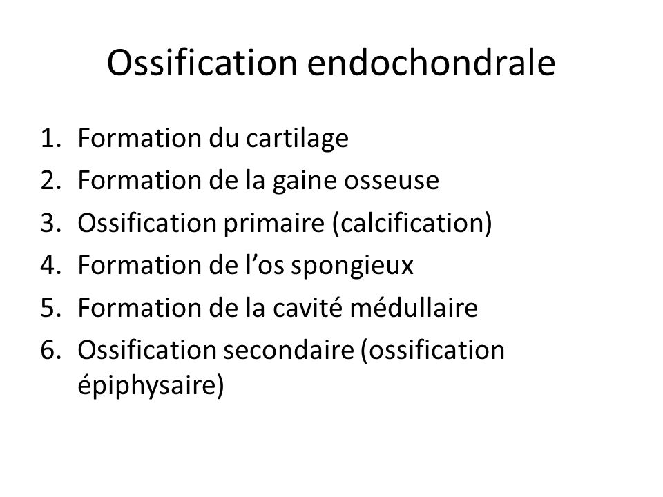 Ossification endochondrale 1.Formation du cartilage 2.Formation de la gaine osseuse 3.Ossification primaire (calcification) 4.Formation de l'os spongi