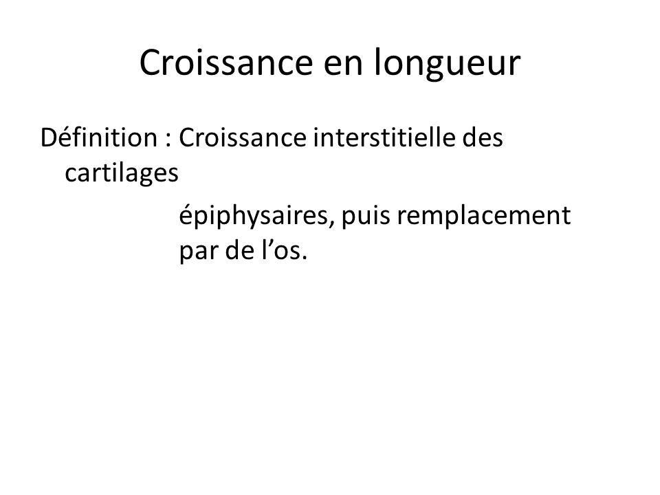 Croissance en longueur Définition : Croissance interstitielle des cartilages épiphysaires, puis remplacement par de l'os.