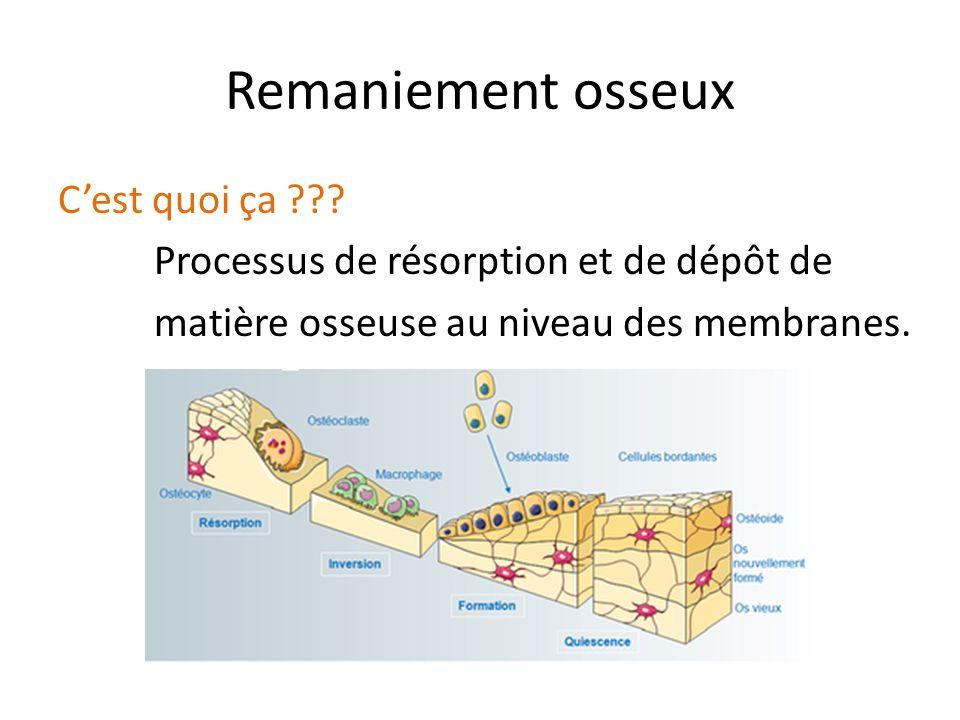 Remaniement osseux C'est quoi ça ??? Processus de résorption et de dépôt de matière osseuse au niveau des membranes.