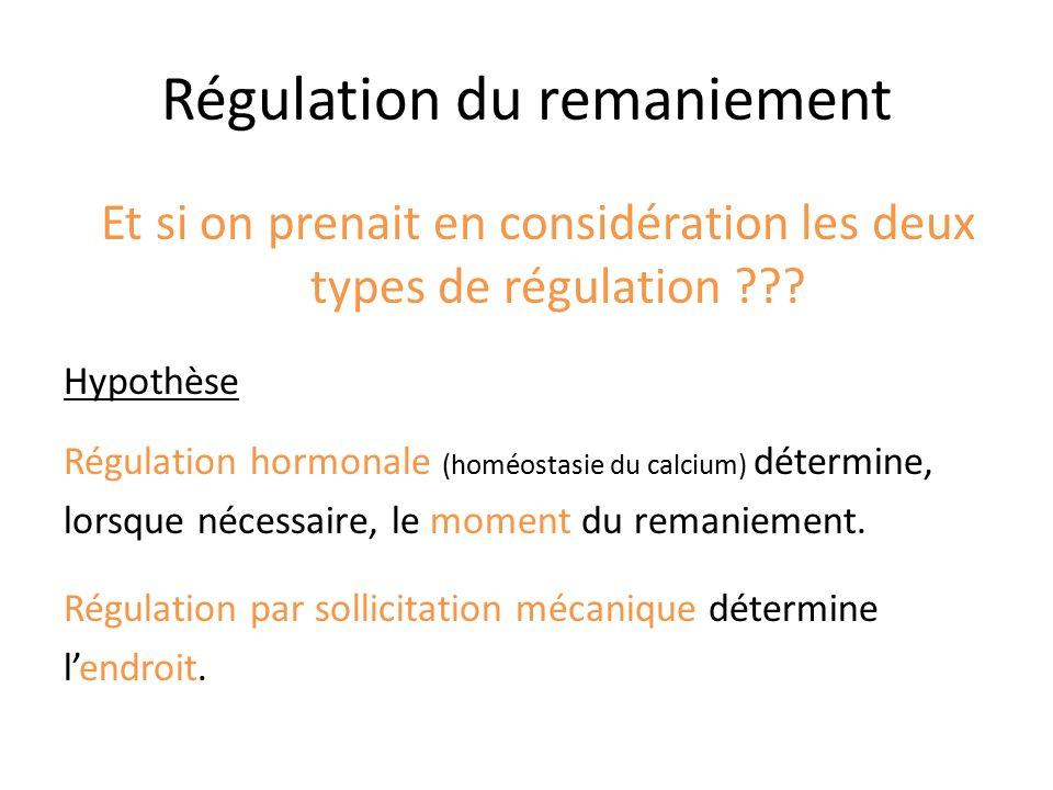 Régulation du remaniement Et si on prenait en considération les deux types de régulation ??? Hypothèse Régulation hormonale (homéostasie du calcium) d
