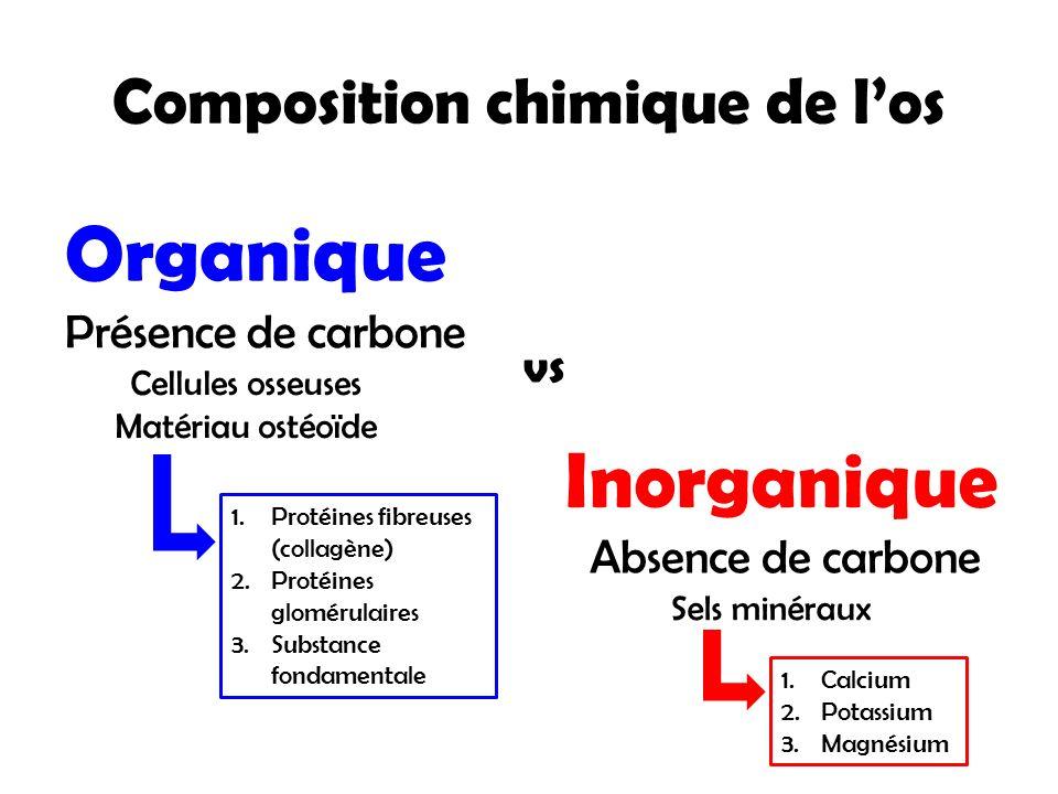 Composition chimique de l'os Organique Inorganique Présence de carbone Absence de carbone Cellules osseuses Matériau ostéoïde Sels minéraux vs 1.Proté