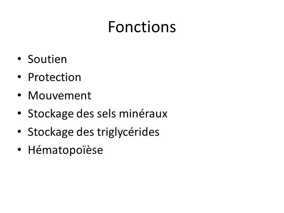 Fonctions Soutien Protection Mouvement Stockage des sels minéraux Stockage des triglycérides Hématopoïèse