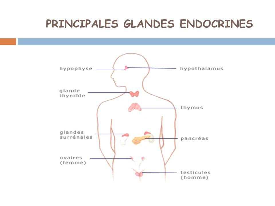 Le pancréas: 2 fonctions: ENDOCRINEEXOCRINE Régule la glycémie Par 2 hormones antagonistes: Cellules β: INSULINE (hypoglycémiante) Cellules α: GLUCAGON (hyperglycémiante) Sécrète le suc pancréatique (transformation des aliments)