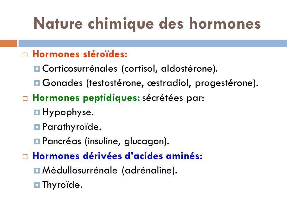 La thyroïde  Située à la face antérieure du cou contre la trachée, sous la pomme d'Adam  Comporte 2 lobes latéraux reliés par un isthme (en forme de papillon) Hormones sécrétées  T4  T3  Calcitonine