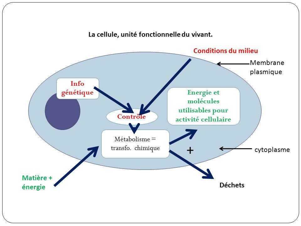 Métabolisme = transfo.