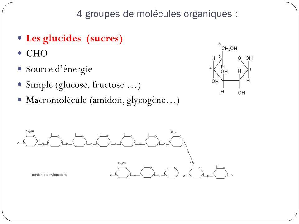 4 groupes de molécules organiques : Les glucides (sucres) CHO Source d'énergie Simple (glucose, fructose …) Macromolécule (amidon, glycogène…)