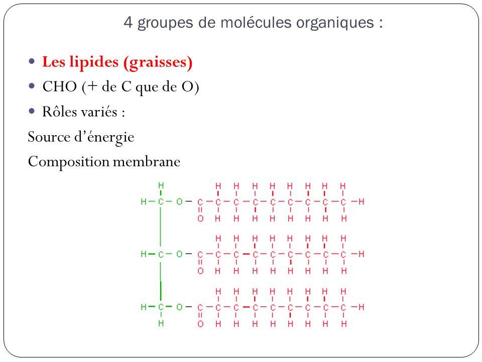 4 groupes de molécules organiques : Les lipides (graisses) CHO (+ de C que de O) Rôles variés : Source d'énergie Composition membrane