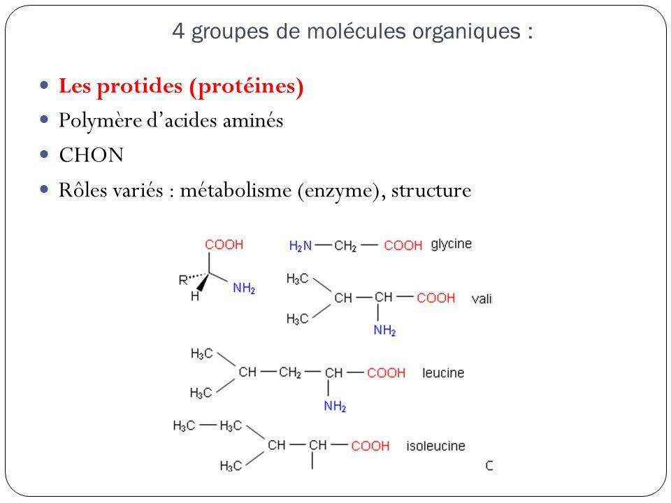 4 groupes de molécules organiques : Les acides nucléiques Présent dans le noyau CHONP ADN et ARN Une unité de constitution, qualitative et quantitative des êtres vivants, qui constitue un indice de leur parenté.