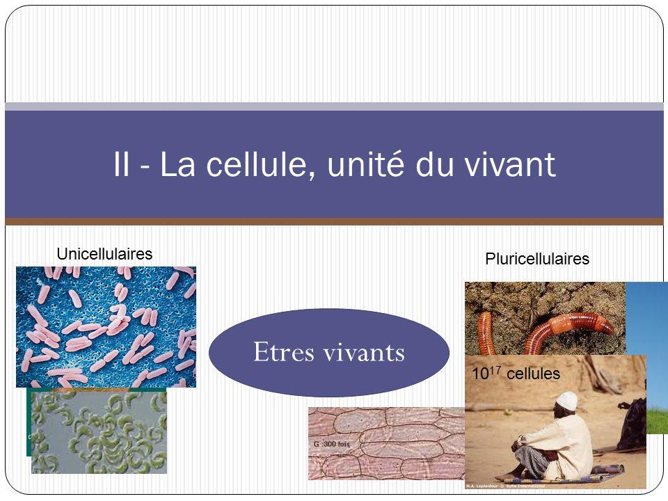 II - La cellule, unité du vivant Etres vivants Unicellulaires Pluricellulaires 10 17 cellules