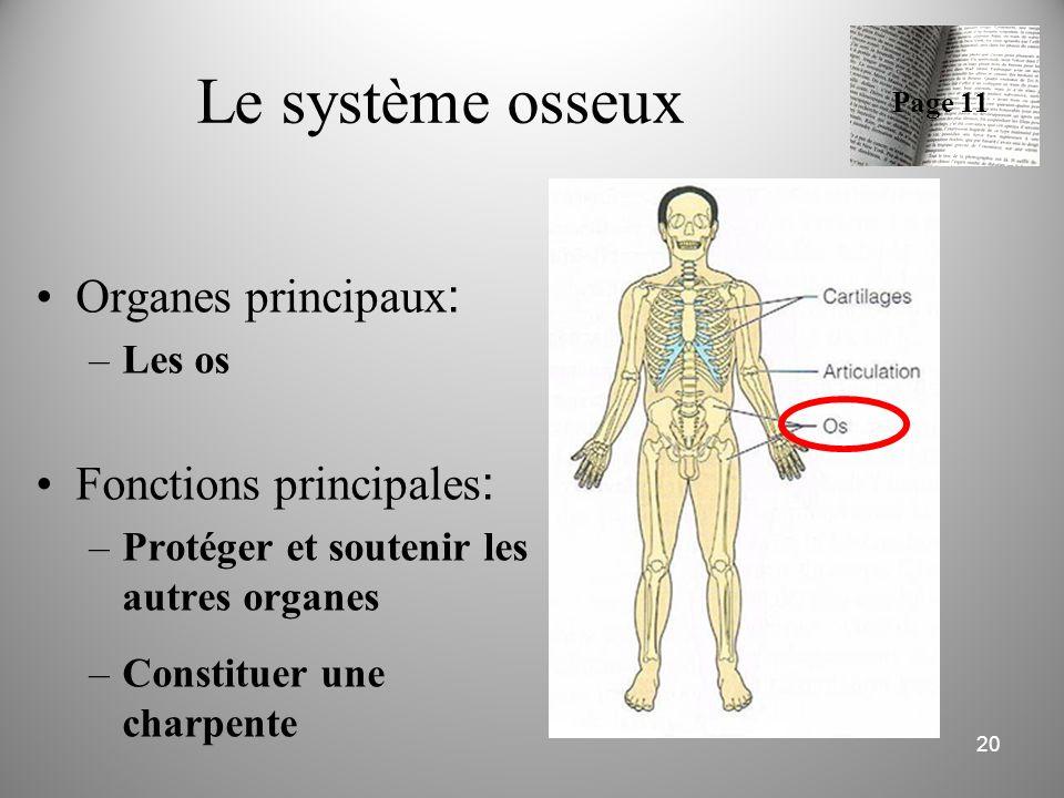 Le système osseux Organes principaux : –Les os Fonctions principales : –Protéger et soutenir les autres organes –Constituer une charpente 20 Page 11
