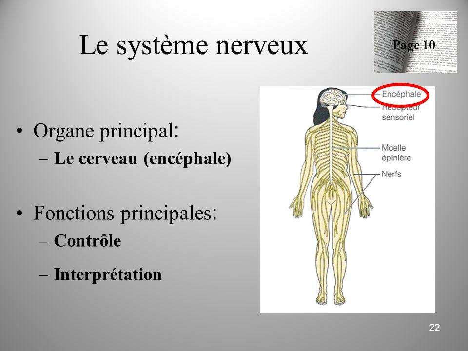 Le système nerveux Organe principal : –Le cerveau (encéphale) Fonctions principales : –Contrôle –Interprétation 22 Page 10